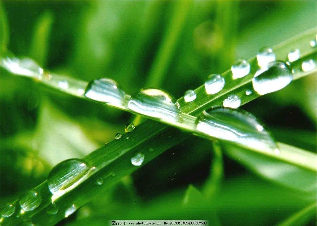 露珠 绿叶 自然风景 自然景观 摄影 72dpi jpg