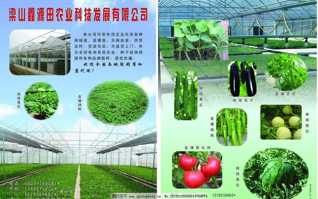 农业科技彩页 蔬菜 瓜果图片