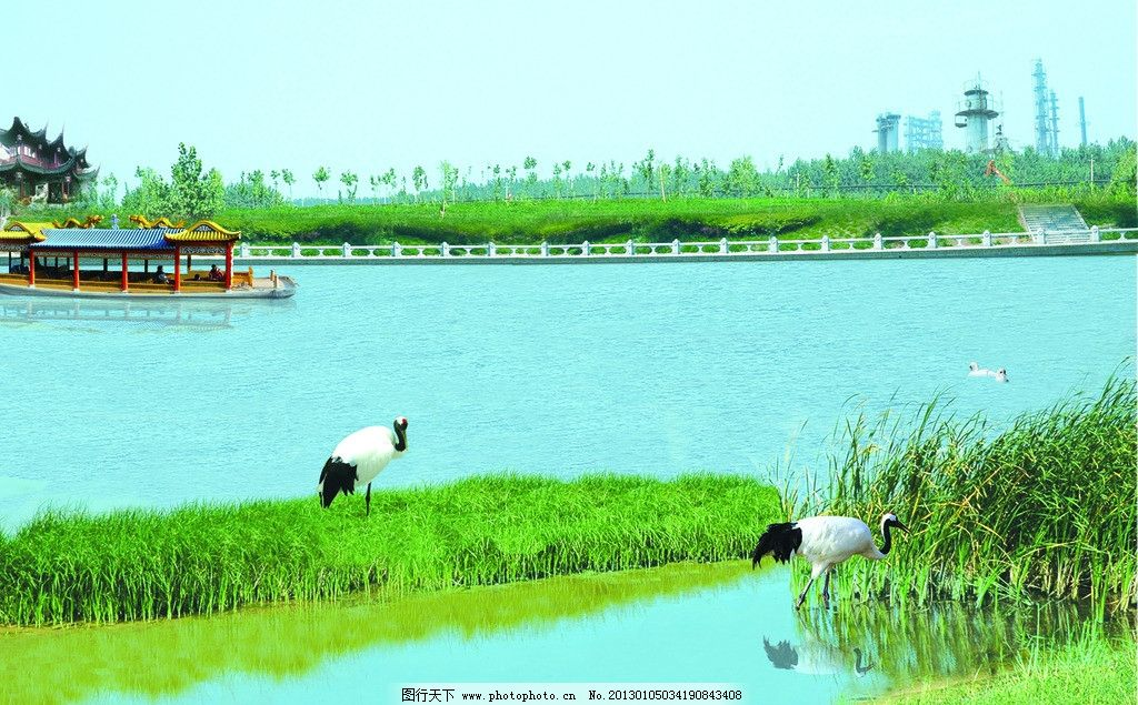 仙鹤湖 仙鹤 蓝天 白云 绿草地 清水 树木 船只 自然风景 旅游摄影