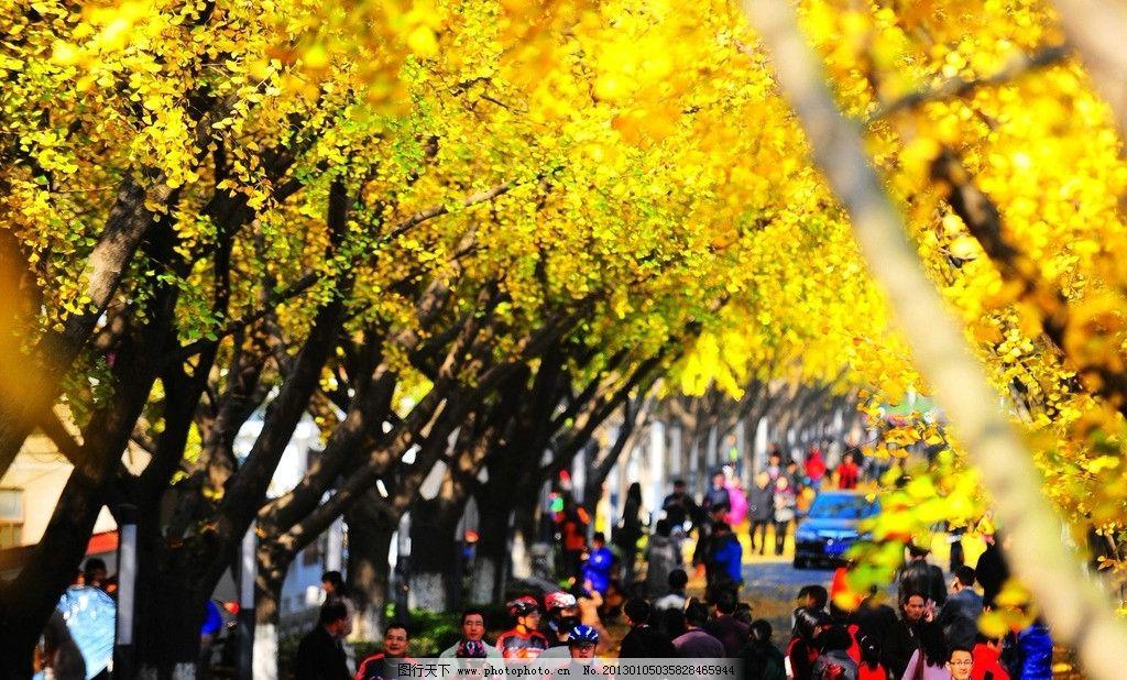 金黄秋叶 金黄 秋叶 游客 秋天 树木树叶 生物世界 摄影 96dpi jpg