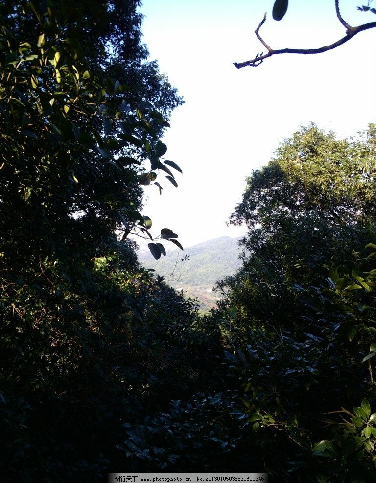 树木 植物 绿色植物 山上景观 树木树叶 生物世界 摄影 72dpi jpg