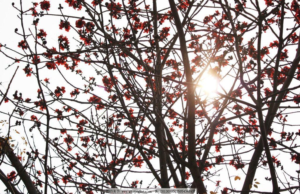 木棉 光线 叶子 木棉花 红色 树枝 树木树叶 生物世界 摄影 72dpi jpg