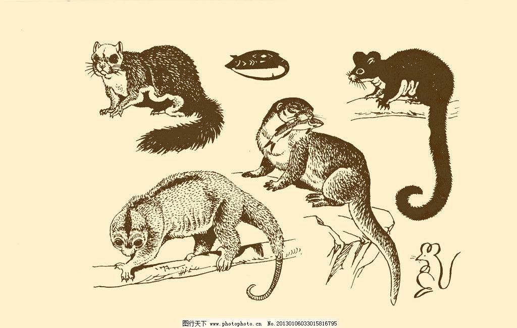 动物图案 老鼠 卡通 动物