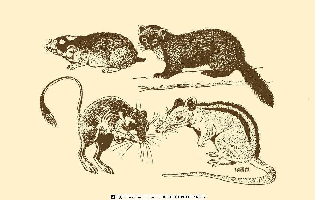 老鼠 卡通 动物 纹样 图案 白描 简笔画 儿童画 鼠 鼠年 psd分层素材