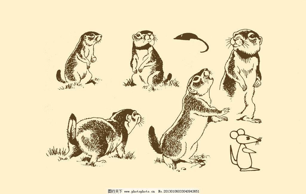 动物图案 松鼠 卡通 动物 纹样 图案 白描 简笔画 儿童画 小松鼠 psd