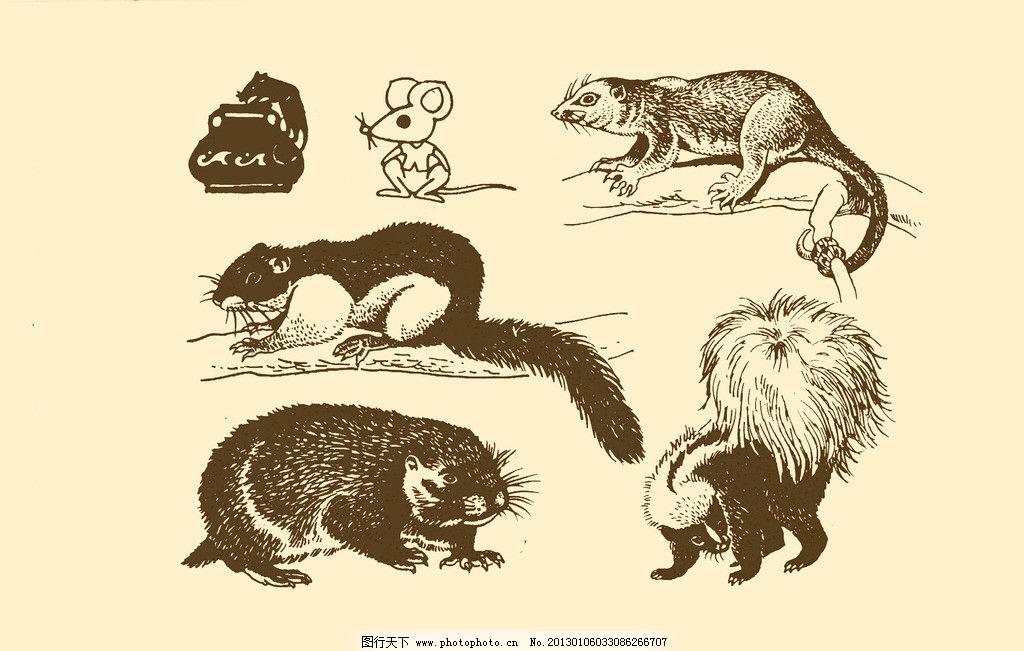 动物图案 松鼠 卡通 动物