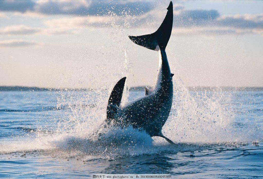 比蓝鲸重10000倍的动物