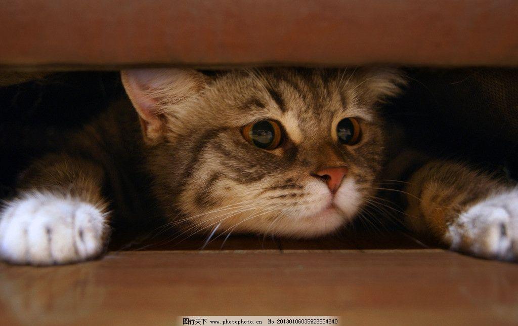 小猫 猫 淘气的猫 喵星人 喵 躲在沙发下的猫 沙发 可爱 淘气 家禽