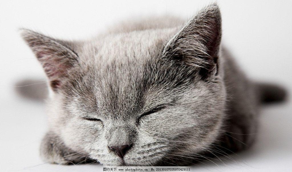 小猫猫可爱卖萌正面