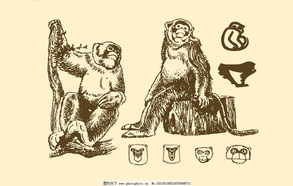 简单素描猴子步骤图片