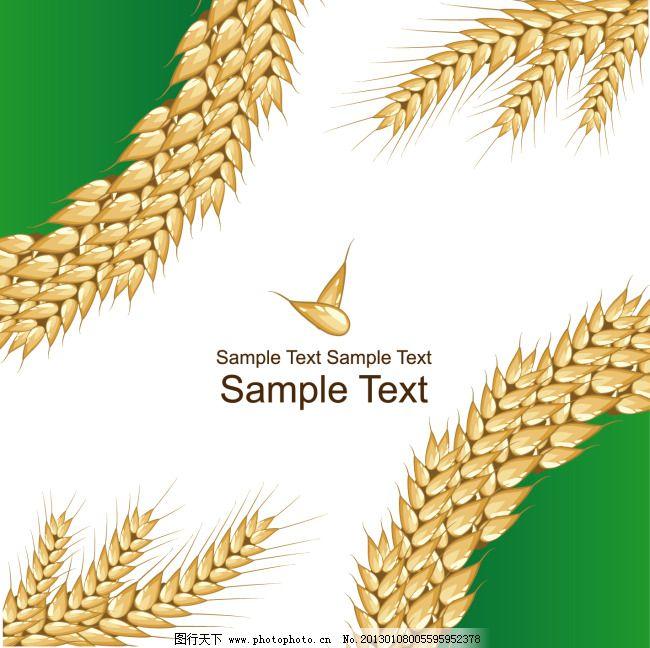 矢量精美麦穗背景素材免费下载 标签 颗粒 麦粒 麦穗 图片素材 麦穗