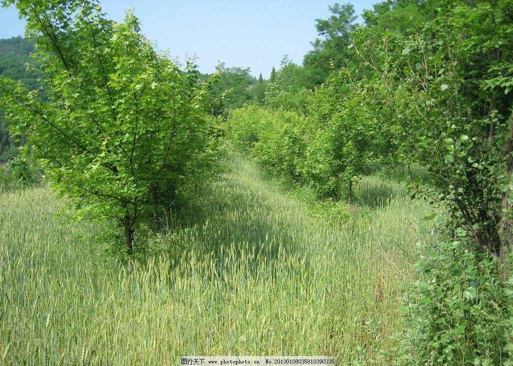 森林 蓝天 白云 树木树叶 生物世界 摄影 180dpi jpg