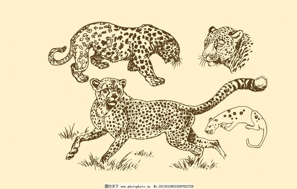 动物图案 豹 卡通 动物 纹样 图案 白描 简笔画 儿童画 豹子 猎豹 psd