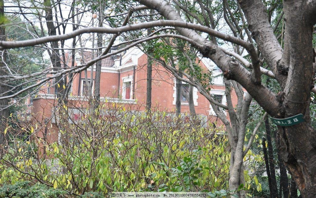 大树 建筑 摄影 树木 风景 旅游 景观 上海 房屋 建筑景观