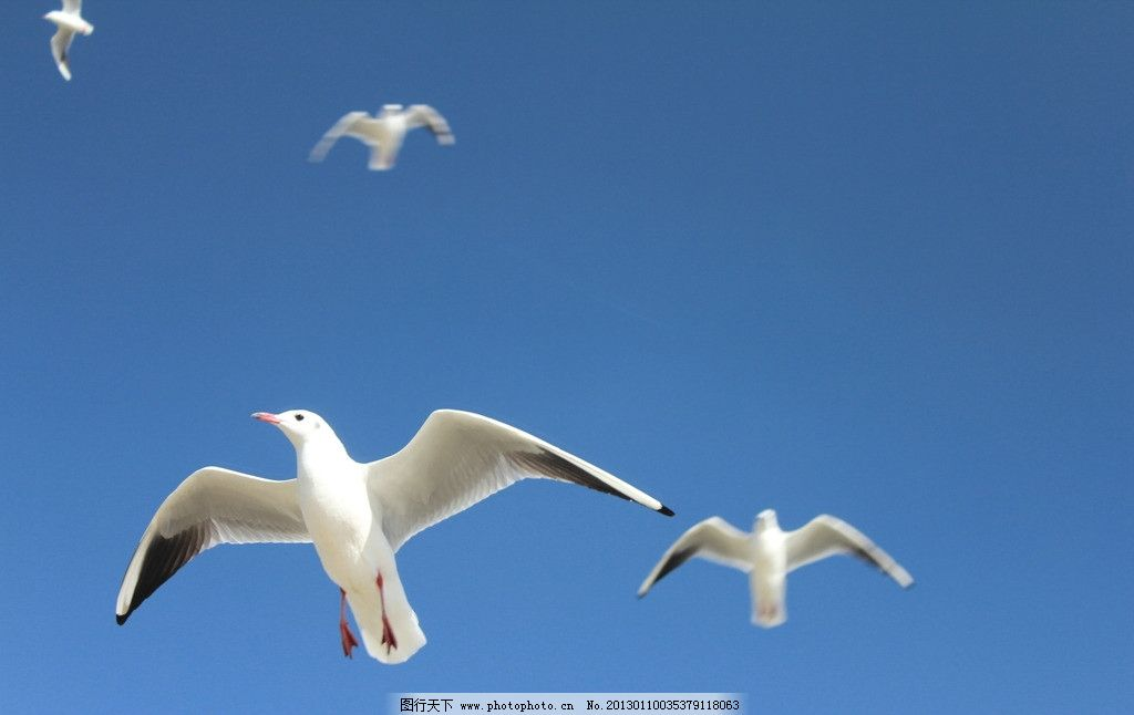海鸥歌曲儿歌五线谱