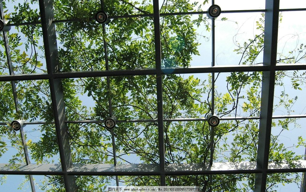 植物拍摄 植物 绿化 博物馆 苏州博物馆 钢架 叶子 爬山虎 园林建筑