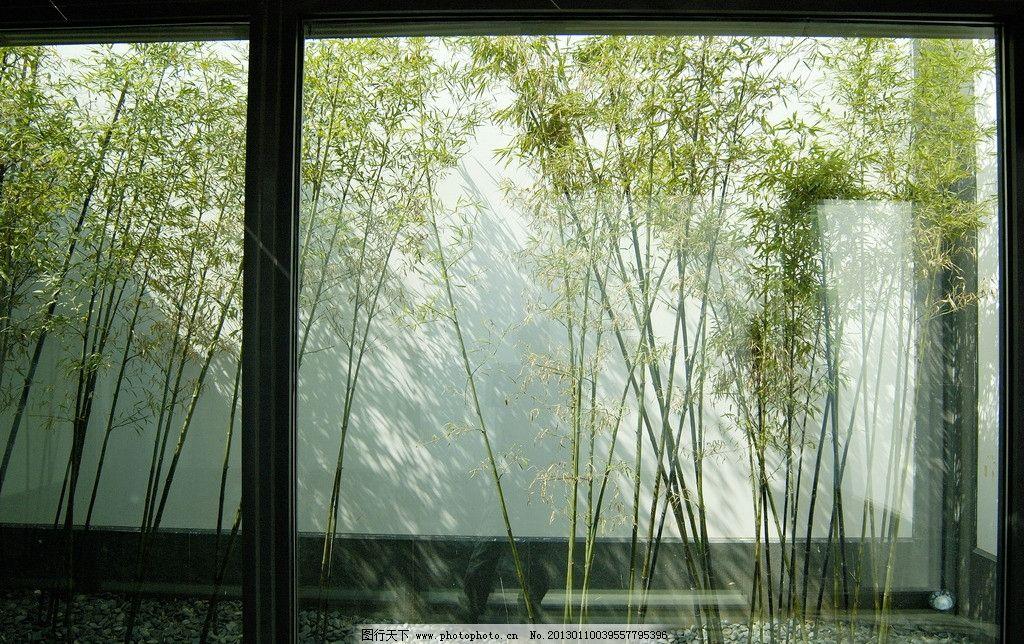 苏州博物馆 景观 园林 苏州园林 植物 竹子 园林建筑 建筑园林