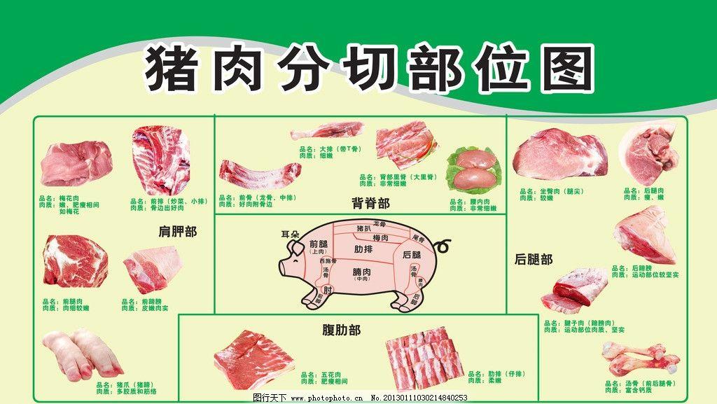 猪分割部位图图片