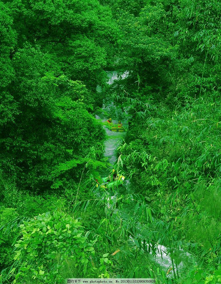 绿叶 竹林 森林 树林 树木 绿地 绿树林 国内旅游 旅游摄影 摄影 300d图片
