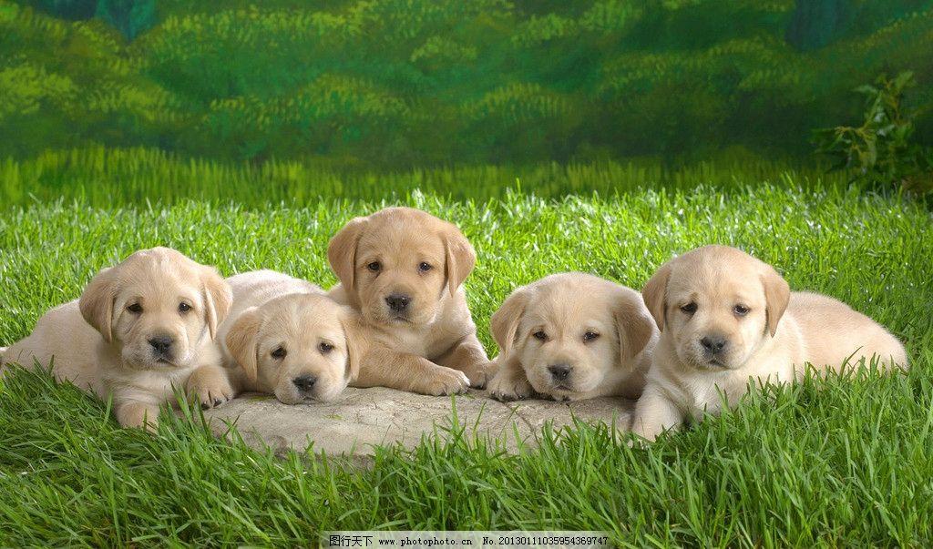 可爱小狗 壁纸 绿色 动物 清新 春季 桌面壁纸 高清图片 质感