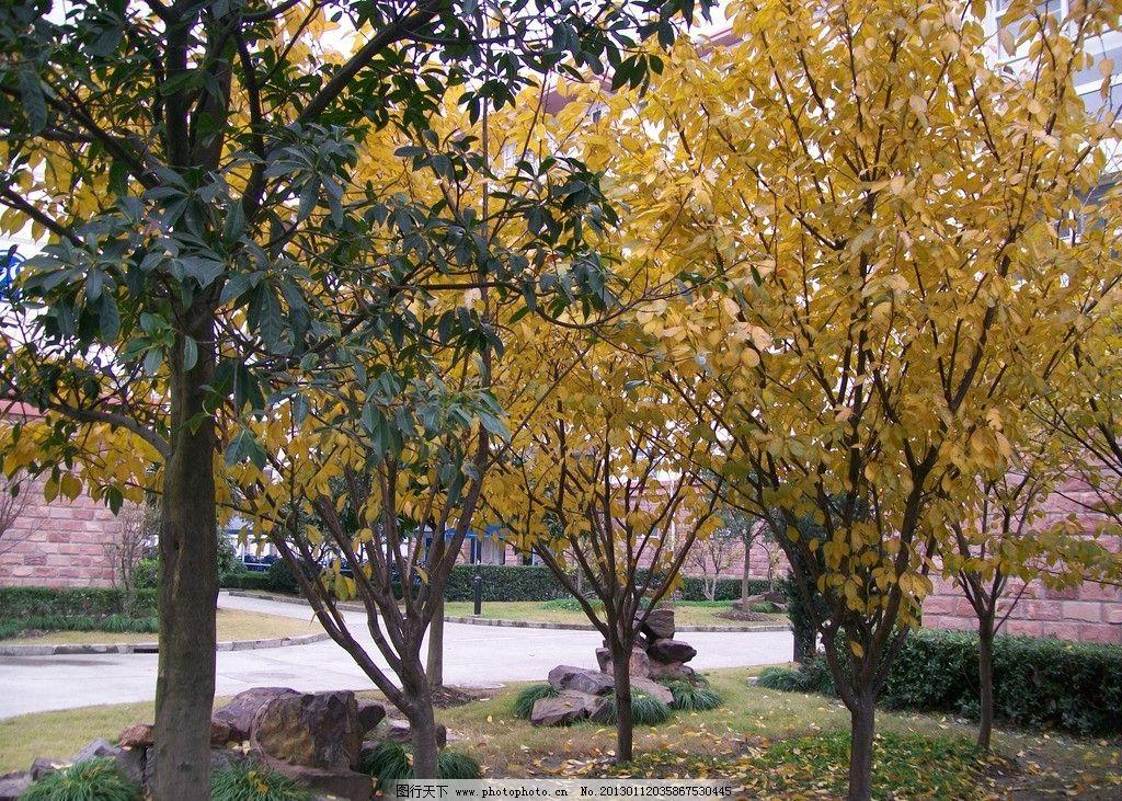 初秋 秋色 秋天 落叶 校园 松江大学城 文汇路 宿舍区 学生 树木树叶