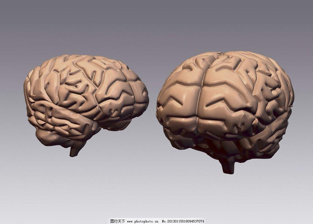 大脑结构图片_网页界面模板