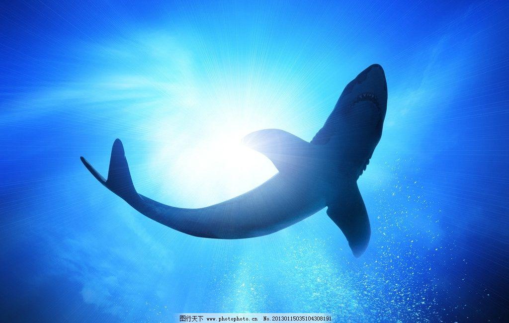 鲨鱼 大白鲨 海洋 大海 海底 海水 美丽 梦幻 蓝色 光线 阳光 海洋