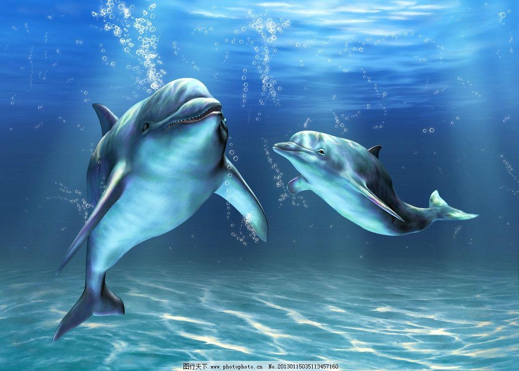 海豚手绘电脑壁纸