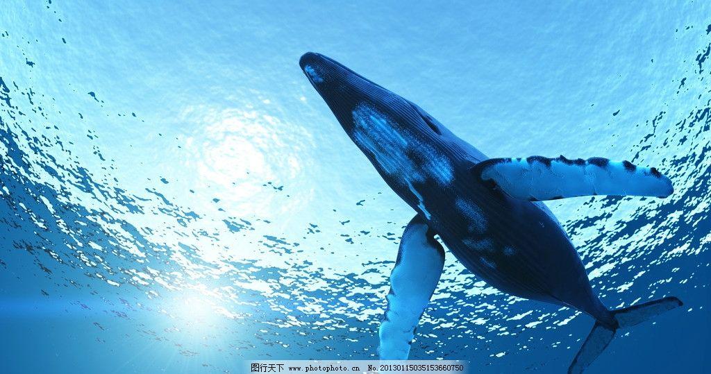 壁纸 动物 海洋动物 鲸鱼 桌面 1024_539