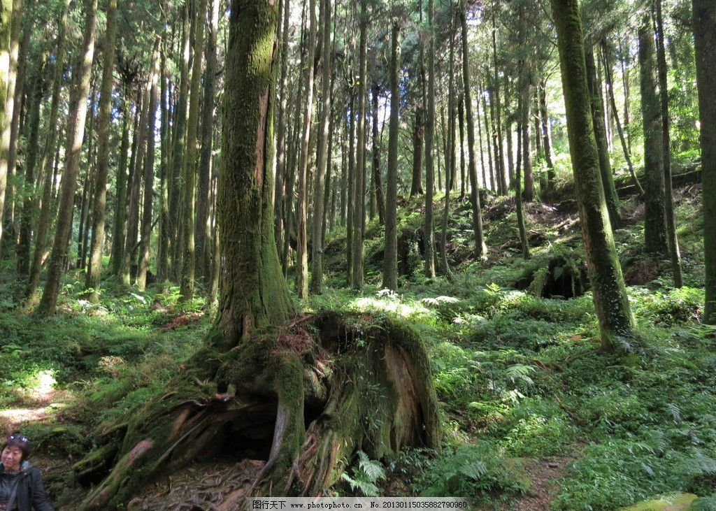 森林 蓝天白云 马路 草地 树木树叶 生物世界 摄影 180dpi jpg
