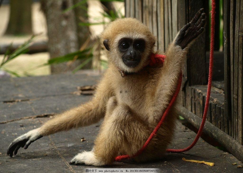 小猴 猴子 小猴子 野生动物