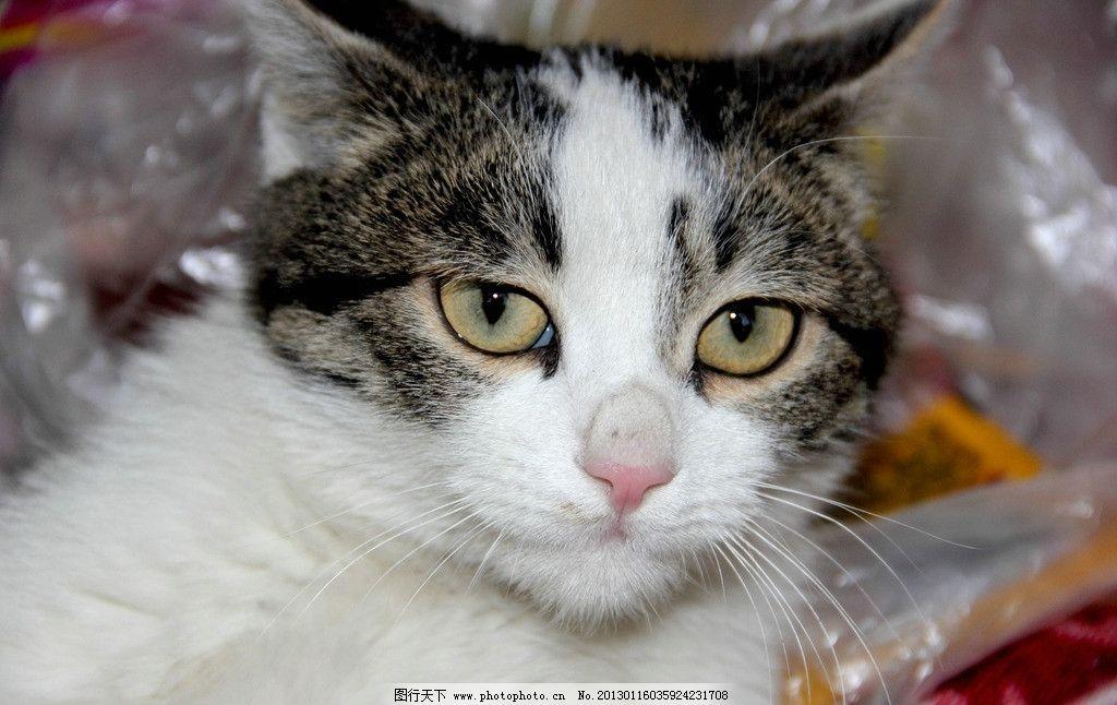 猫咪 可爱猫咪 大眼睛猫咪 家禽家畜 生物世界 摄影 350dpi jpg