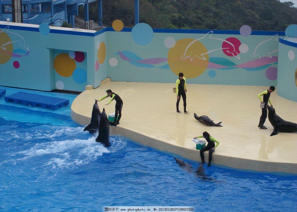 废品手工制作海豚