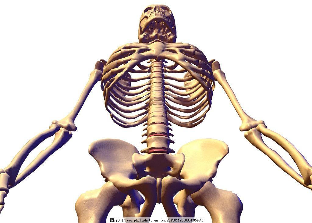 骨骼图片_网页界面模板_ui界面设计_图行天下图库