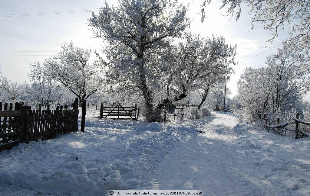 雪景 冬雪 白雪 积雪 雪挂 冰冷 冬天 树林 树木 松树 树枝