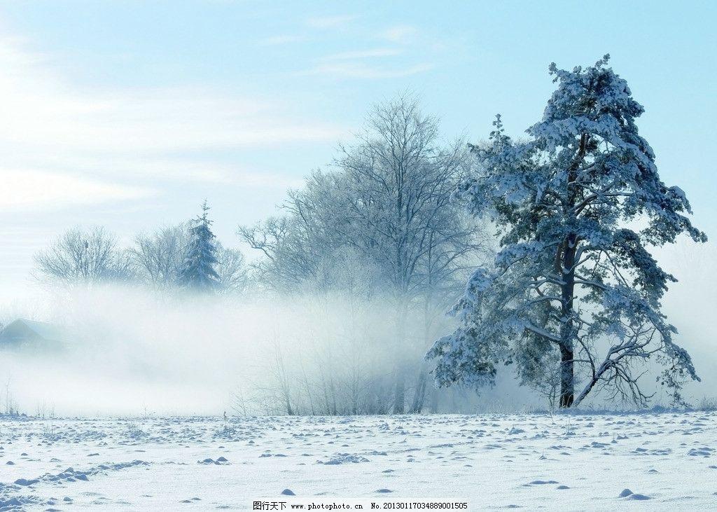 冬天树木图片大全图片