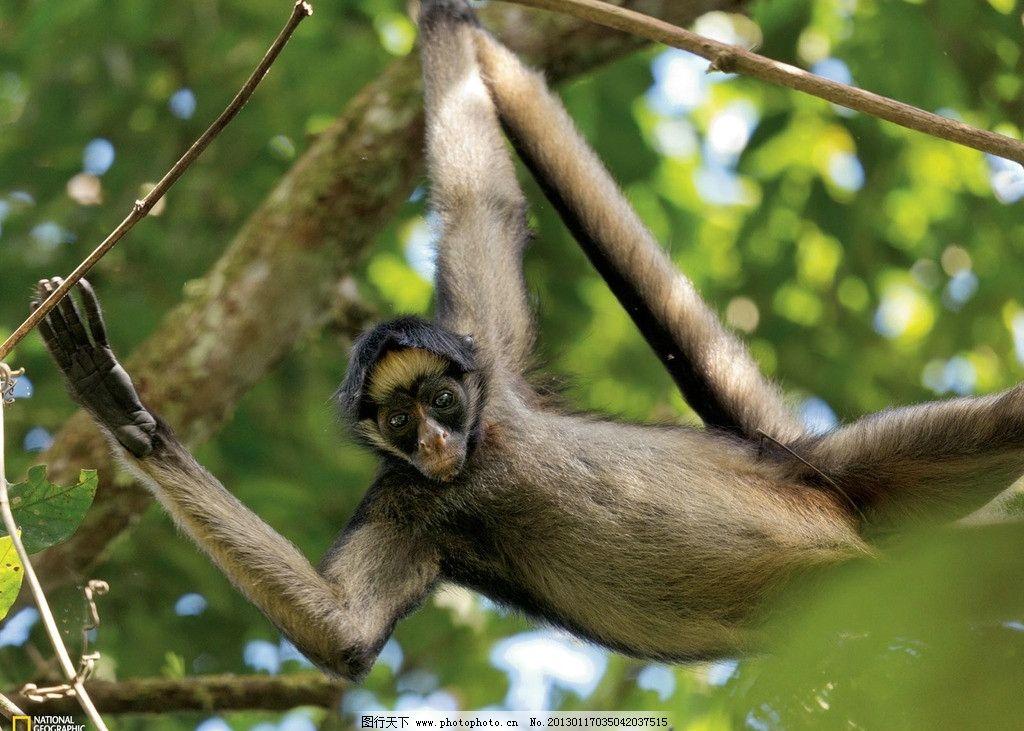 猴子 亚马逊 湿地 动物 爬树 可爱 眼神 野生动物世界 摄影