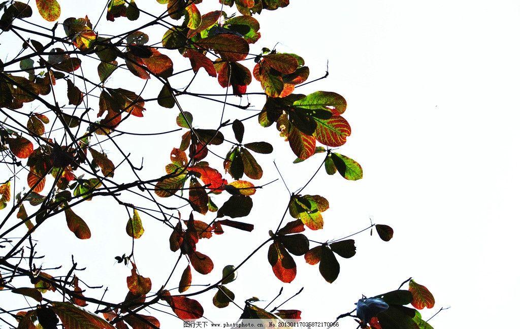树枝笔筒手工制作图片