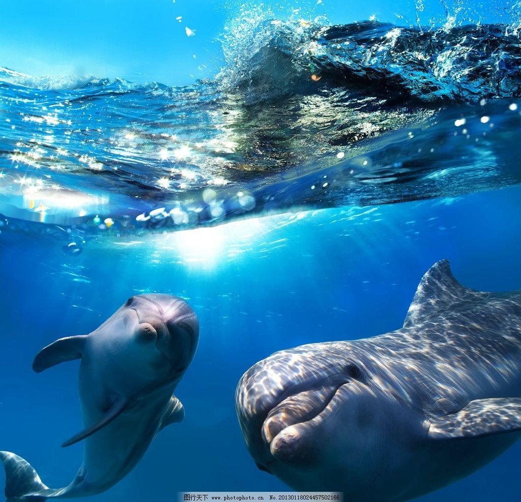 鲸鱼 海豚 蓝色 海洋 海洋生物 水花 野生动物 生物世界 设计 300dpi