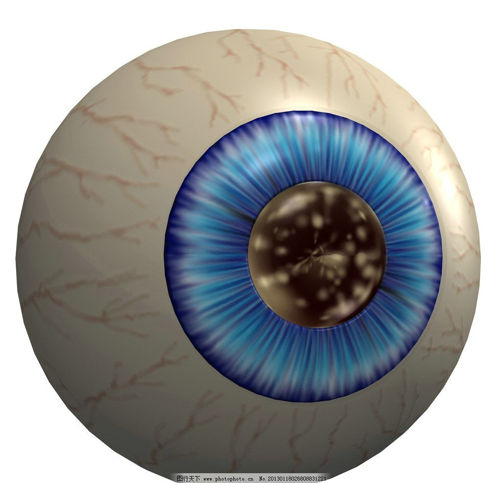 眼球 眼 眼珠 瞳孔 视网膜 3d器官 眼部结构 人体器官 人体研究 医学