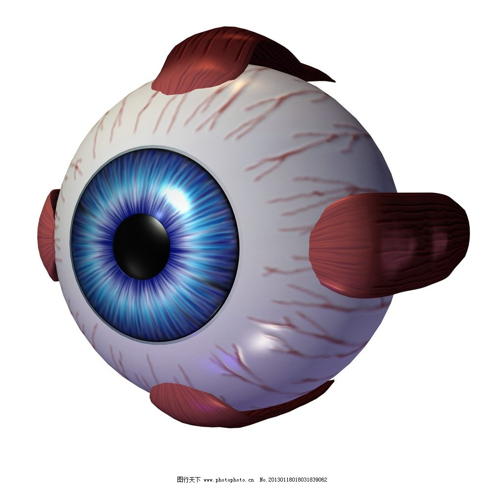 眼珠 眼球 眼 人眼 瞳孔 视网膜 3d器官 眼部结构 人体器官 人体研究