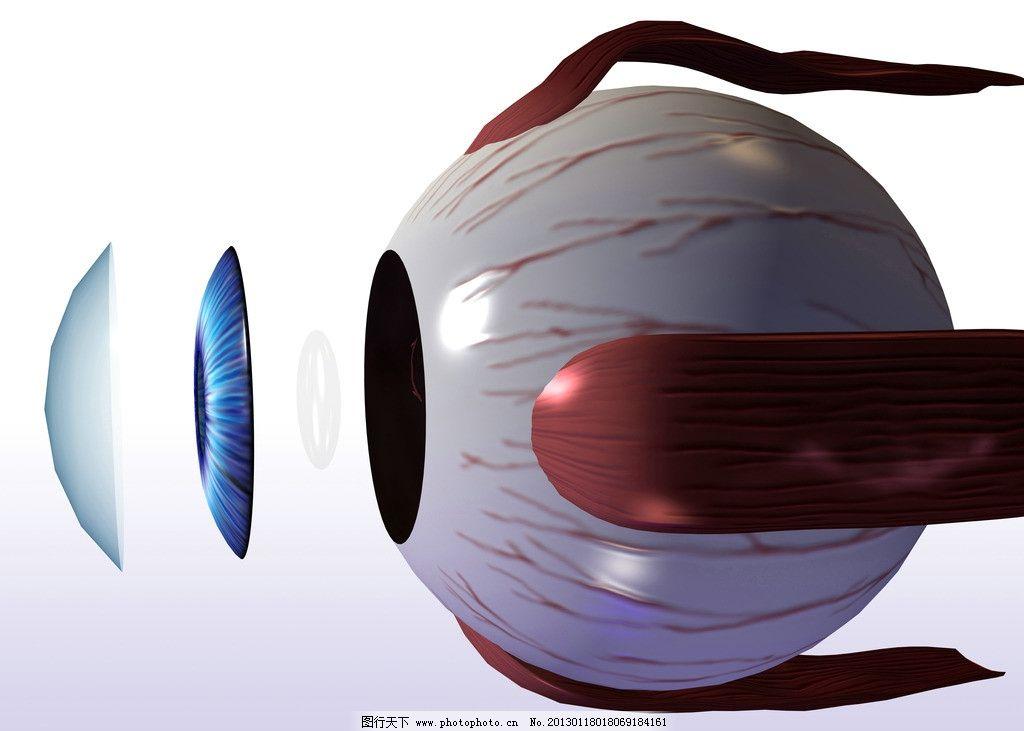 眼 眼珠 人眼 眼球 瞳孔 视网膜 眼部结构 人体器官 人体研究