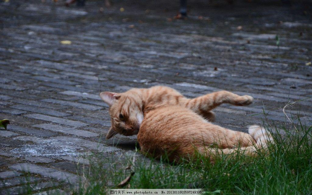 野猫 伸懒腰 玩耍 家禽家畜 生物世界 摄影 300dpi jpg