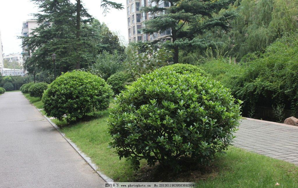 景观植物 马路 绿色 植物