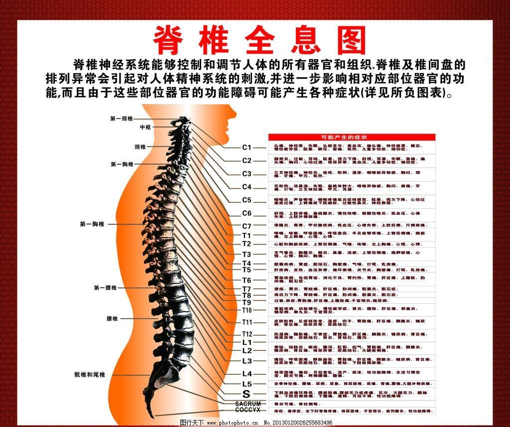 推拿脊椎保健 全息图 人体器官 人体结构 身体脊椎部位 身体症状
