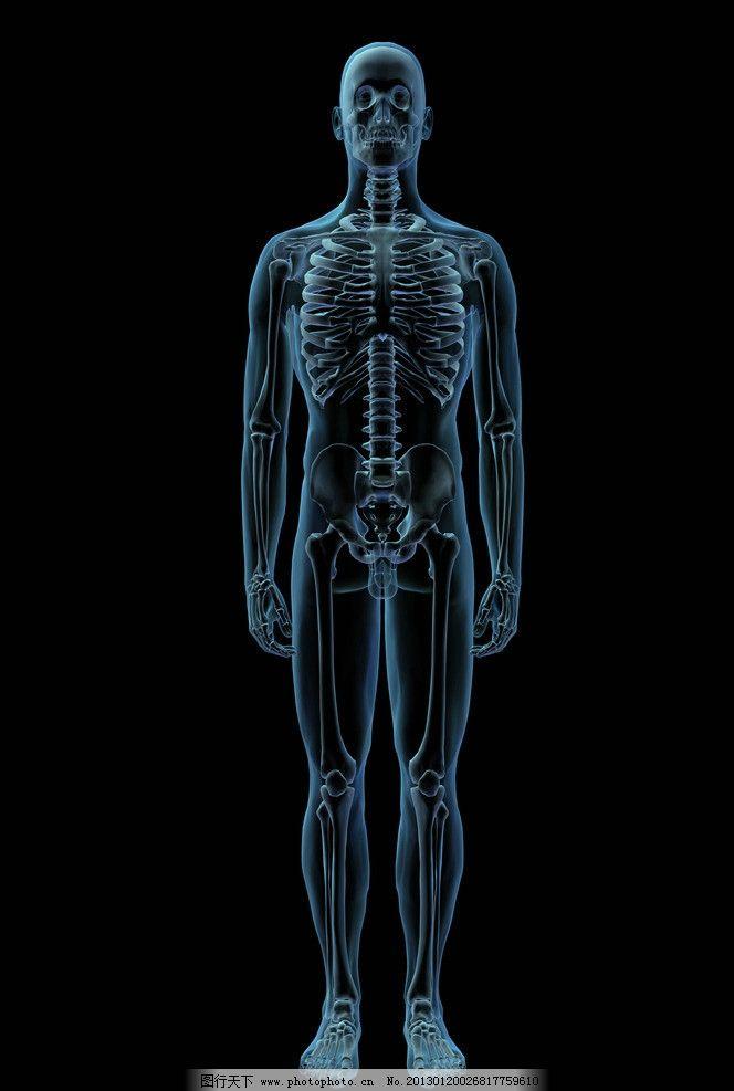 人体透视图片