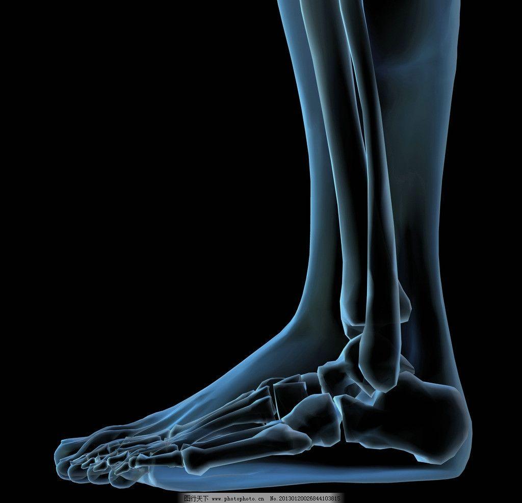 脚部骨骼 足部骨骼 踝骨 足背骨 跟骨 趾骨 距骨 足舟骨 人体透视