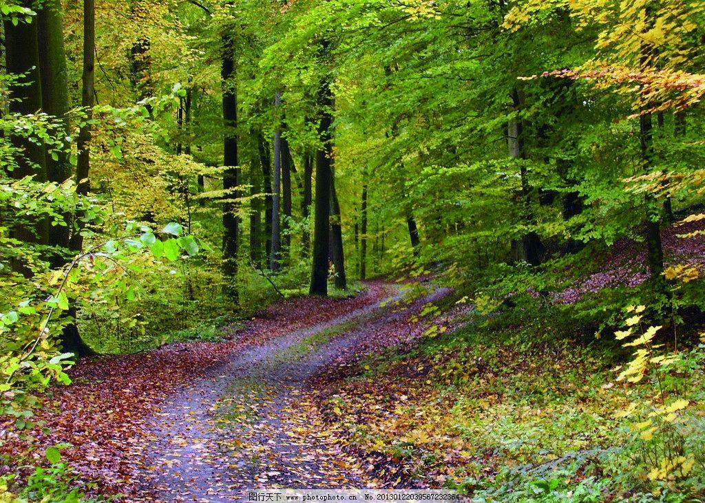 园林 公园 风景区 小区 绿化 草地 草坪 树林 郊外 郊区 小路
