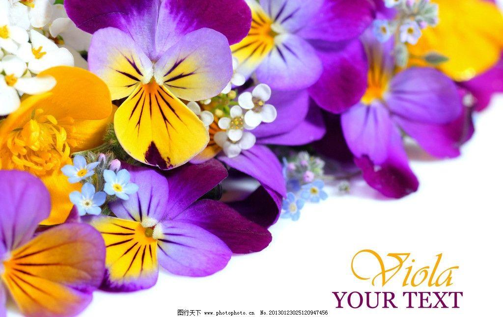 紫色花朵 紫色鲜花