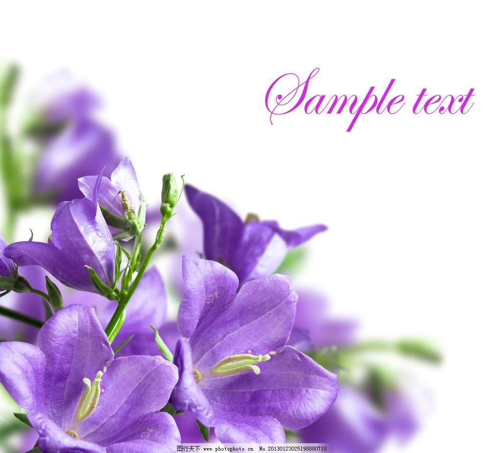 剪4花瓣花的详细步骤图